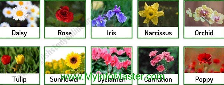 flowers, beautiful flowers, garden flowers, home garden, gardening, flower tips, gardening tips, beautiful garden, flowers list
