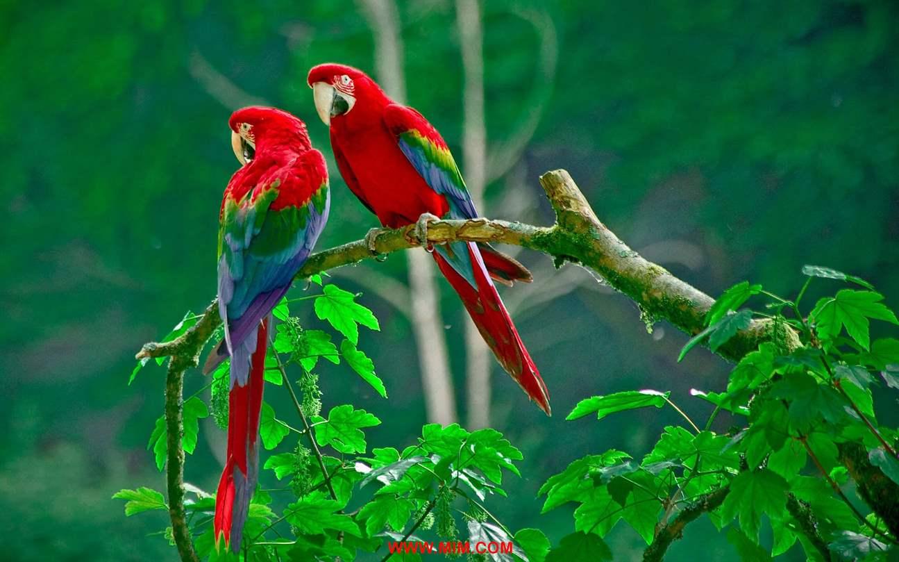 beautiful birds of world, beautiful bird, love bird, best birds, pretty animals, birdsillustration, bird videos, fall birds, animals amazing, birdwatching,