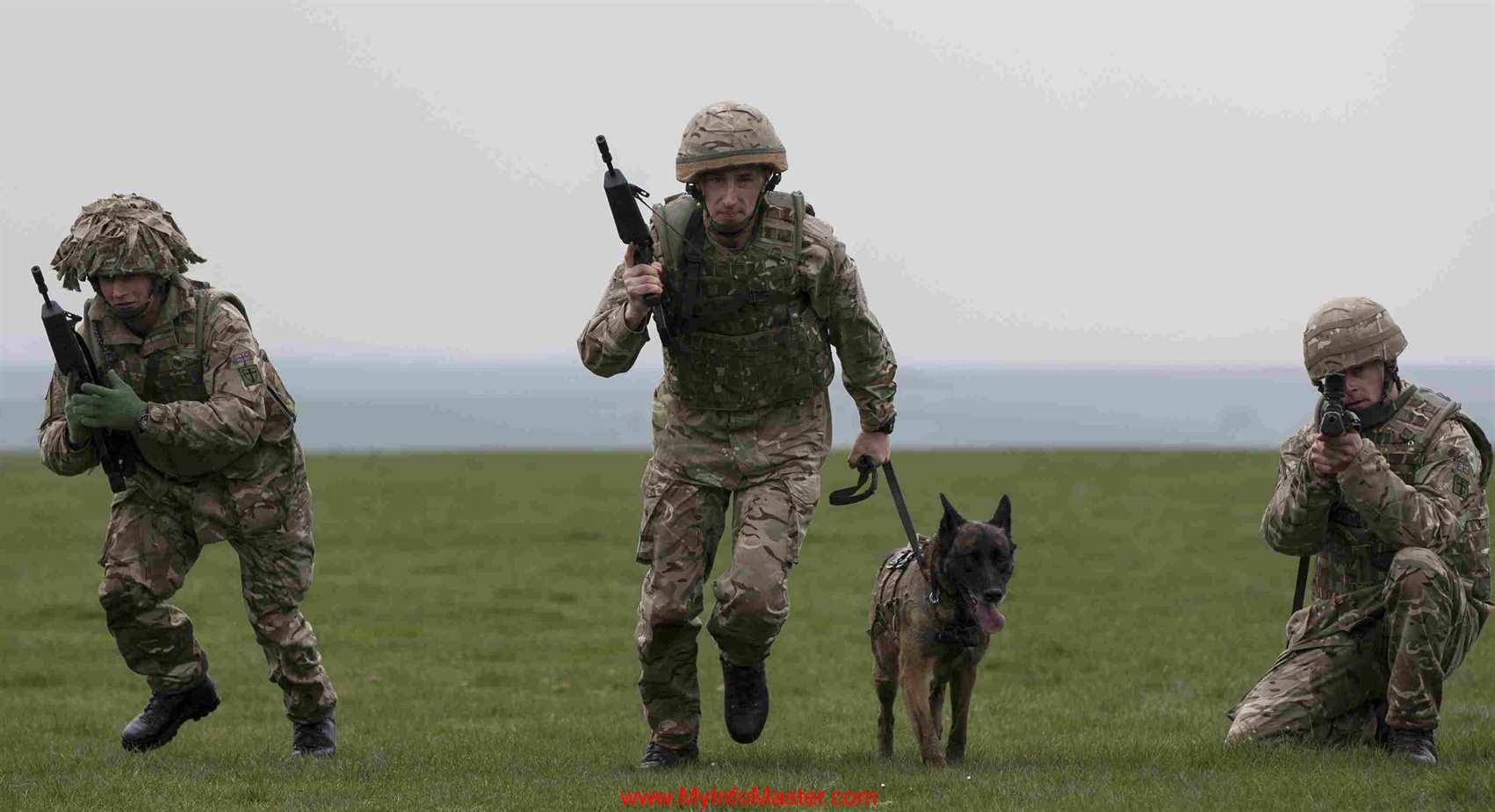 workingbreeds, workingcocker spaniel, police dog breeds, workingdog breeds, military dog breeds, working kelpie, typesof policedogs, workingspringer spaniel