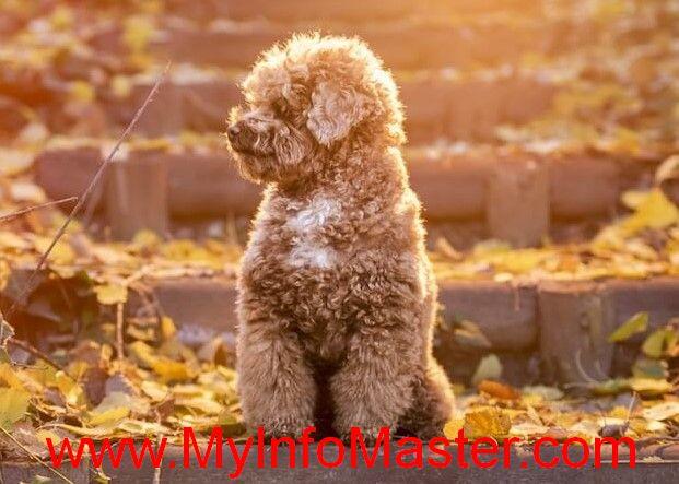 dog breed, dog, bhomemadedog toys easy, diy dog toys easy, dyi dogtoys, diedog stuff toy, dogtoys diy homemade