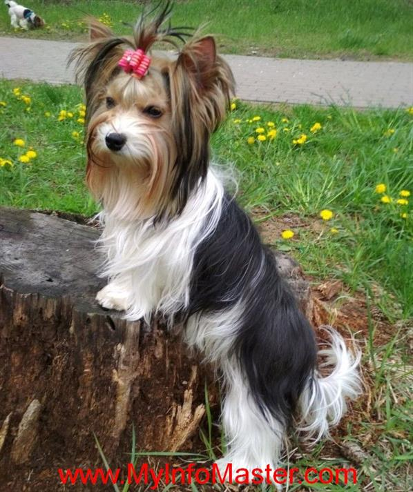 sporting group, sporting dogbreed group, nonsporting dogs, akcherding group, akcsporting group, nonsporting dog group, akc nonsporting group