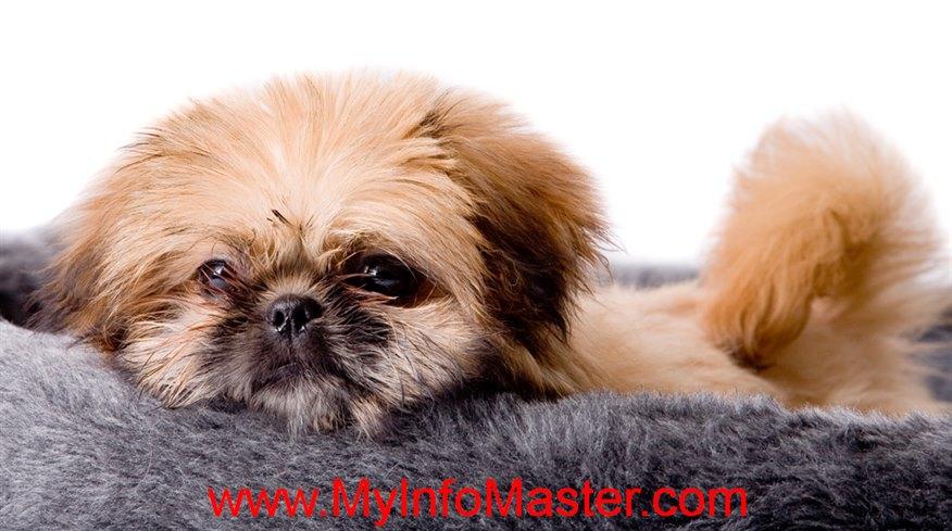 toybreed, poodlebreed, stimulating dog toys diy, homemadedog toys easy, diy dog toys easy, dyi dogtoys, diedog stuff toy, dogtoys diy homemade