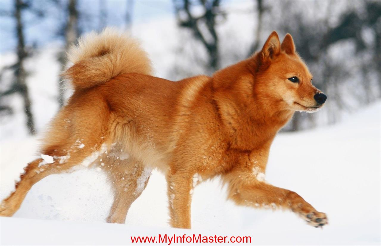 nonsporting group, nonsporting dog group, akc nonsporting group, non sportinggroup winner, non sporting groupwestminster 2020, dogshow non sporting group, akcnon sporting, list of nonsporting