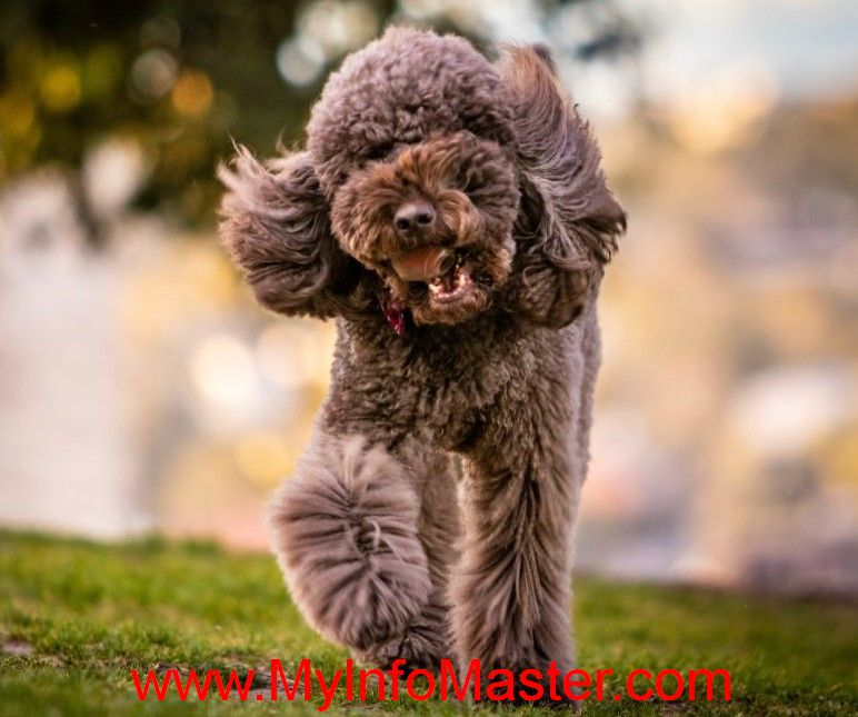 , non sporting groupwestminster 2020, nationaldog show 2020 non sporting group, dog breeds dogs, diy dog, diy dog kennel, dog loss, dog eats, dog and cats together, healthy dog, house dog