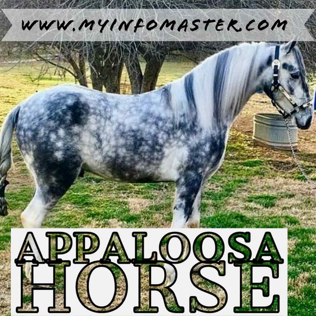 arabian horse, percheron shire, horse quarter, horse akhal teke, clydesdale horse, paint horse, palomino horse, friesian american quarter